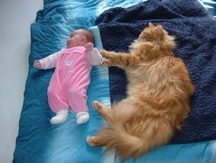 Maine Coon vs Baby