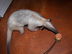 Anteater Target Practice