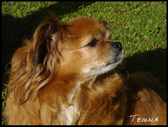 Tequila (Martha MGR) Tags: pets animais mmgr marthamgr marthamariagrabnerraymundo marthamgraymundo
