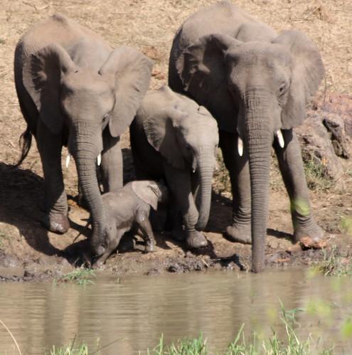 Elephant family, Hluhluwe-iMfolozi Game Reserve
