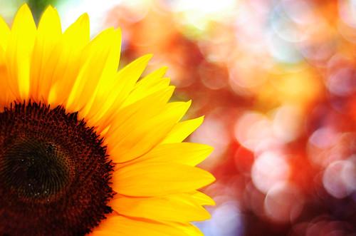 sunny (by shannonpix)