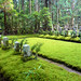 Moss carpet - Okunoin cemetary