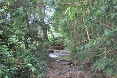 Quebrada abajo (CAUT) Tags: del america colombia farm south au valle kolumbien hg hacienda finca cauca suramrica sdamerika
