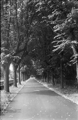 Rhine Walk