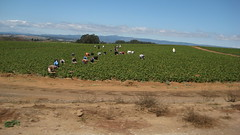 Migrant Farm Workers in Moss Landing IMG_1441.JPG Photo