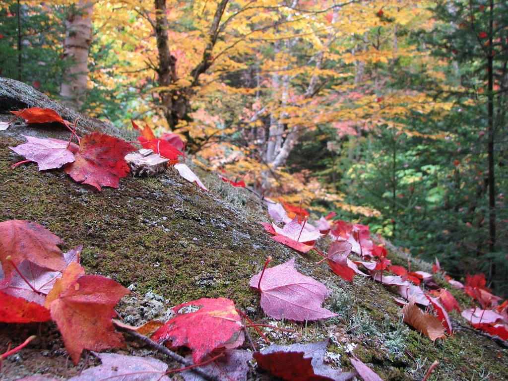 Red leaf down