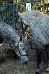 Saint Lubin 2008 Rambouillet Yvelines (ramboliweb) Tags: saint rambouillet yvelines saintlubin