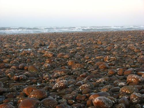 綿延不絕的牡蠣灘