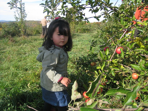 Matilda Apple Picking