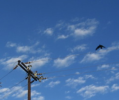 pismo and crow 003