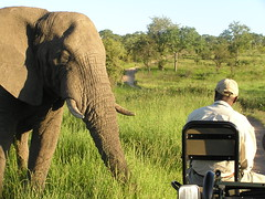 Friendly Foe (gabriela.maestre) Tags: africa elephant animals south singita