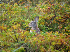 Hello! (Seapony) Tags: rabbit vlieland seapony waddenisland seenthroughthewindowfromtheholidaycottage