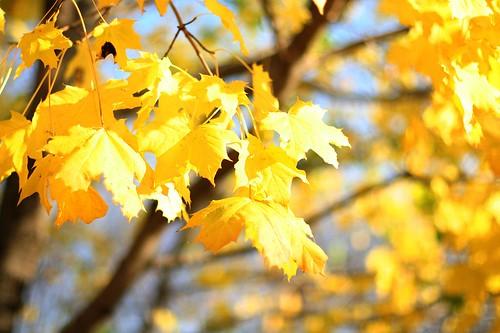 sunny fall leaves
