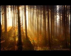 Mistelio (♥ Damona-Art •.¸¸.•´¯`•.♥.•´¯`) Tags: morning trees light fall nature misty frames woods nikon raw shadows seasons herbst natura sunrays forests mystic sunbeams d300 hiddenplaces theworldthroughmyeyes twtmeiconoftheday thesecretlifeoftrees zauberwelt mistelio