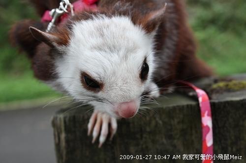 09春節小飛鼠Meiz的花蓮行 (1).JPG