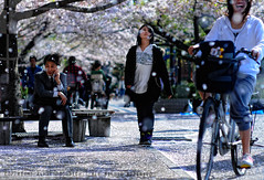Ambivalence, Wonderment, Joy: the panoply of human expression; Hanami, Omori, Tokyo (Alfie | Japanorama) Tags: street flowers trees woman snow man tree cute girl bike bicycle mobile japan walking cherry asian japanese tokyo petals spring nikon phone blossom candid joy blossoms young yuki sakura keitai wonderment hanami salaryman omori d300 nikkor85mmf14daf