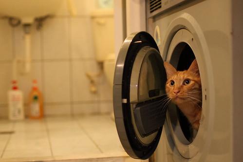 小貓咪的願望