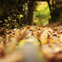 Role out the red carpet (Stuart Stevenson) Tags: autumn red orange canon woodland 50mm scotland october canon300d bokeh walk 14 naturallight stuart autumnleaves stevenson ochre forestfloor umber wetground shallowdepthoffield autumngold lowviewpoint stuartstevenson