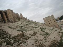 IMG_0009 (QtrTrd) Tags: bird de citadel falcon syria ciudadela castel aleppo siria  halab      alepo