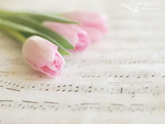 Pastel lullaby.... (ImagesByClaire) Tags: soft pastel depthoffield romantic delicate musicalnotes pinktulips fromthearchives sheetofmusic 50mm14lens clairebrocatophotography