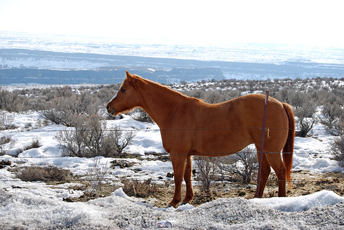 22-Horse Grand Coulee Dry Falls