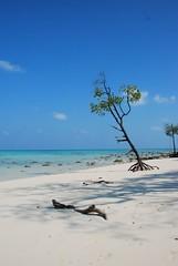 Beach No 3 Havelock Island, Andamans India (neilbetter) Tags: blue india beach beauty island rainforest paradise turquoise mangrove stunning havelock andaman pristine andamans radhanagar mywinners abigfave