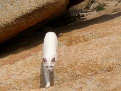 Le chat de Cala Grande