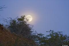 early moon (Luis Eduardo ) Tags: sky moon mountain tree closeup forest canon full moonlight luismosquera
