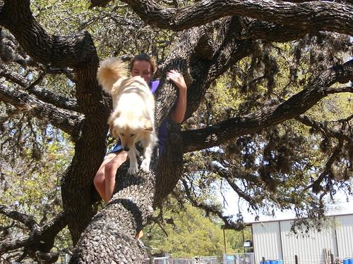 Tree Dog 2