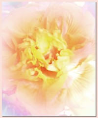 Camelia - Lemon Sherbert (virtually_supine popping in and out) Tags: flowers manipulation camelia photoshopelements floralcreations