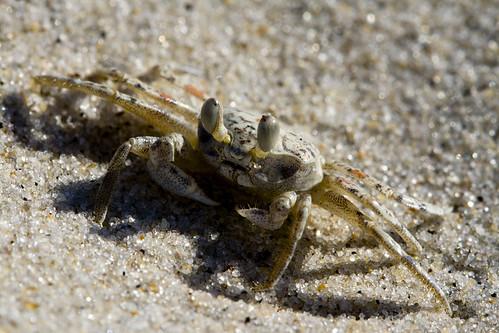 Ghost Crab II