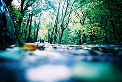 in the forest (* andrew) Tags: road wood tree green film car japan forest lomo lca crossprocessed xprocess branch ct slide aomori 日本 100 agfa akita 秋田 青森 oirase 32mm precisa 秋田県 青森県 supershot ratview oirasekeiryu 奥入瀬川