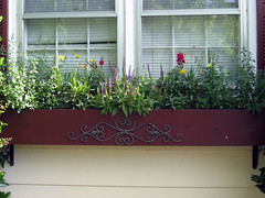 flowerbox view late spring