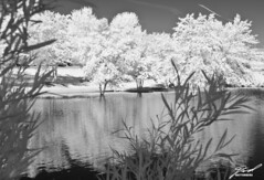 IR Trees & Pond