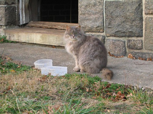 Explorer cat with food dishes