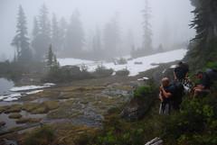 The Fog Descends