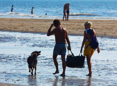 dog summer activities