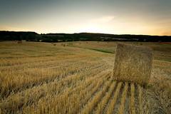 ...While the Sun Shines (joelerskates) Tags: sunset ontario field burlington canon landscape rows 5d hay bale haybale