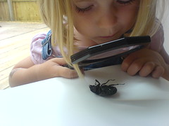 My family and other animals (dan mogford) Tags: stag beetle magnifyingglass daisy