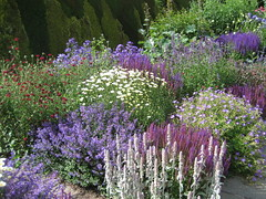 Town Place Garden (Mark Wordy) Tags: flowers sussex haywardsheath salvia scabious opengardens ngs nationalgardensscheme countrygarden townplacegarden ketcherslane freshfieldcrossroads