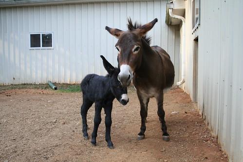 Jetta and baby