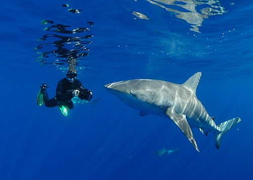 snorkeling with galapagos sharks