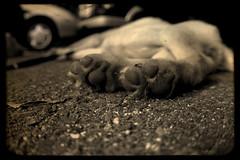 Puppy feet (Stink Poop) Tags: sepia puppy pavement fisheye paws pads dogpaws puppyfeet fakettv