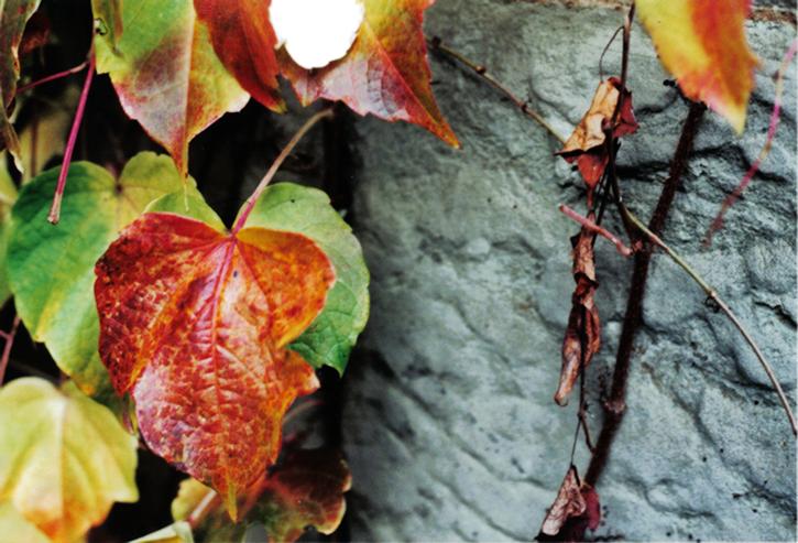 warwick leaf