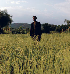 This Ethiopian teff farmer may well have to hand over his crops if a new European treaty is steamrolled into effect. (Photo: Paul Botes).  by Pan-African News Wire File Photos