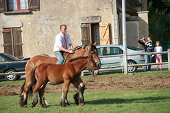 Fête du cheval à Misy-sur-Yonne (77) (Gypsy Cob) Tags: 300views 300 drafthorse foal foals poulain trait fohlen veulen poulains ebol heavyhorse over300views trekpaard chevaldetrait ardennais zugpferd searrach misysuryonne traitardennais umourdelavue ebolion ebeulien ebeul searraich searraigh