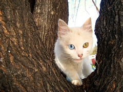 Gatita An sin nombre :) (Rodrigo Daniel) Tags: cats animals cat eyes gatas
