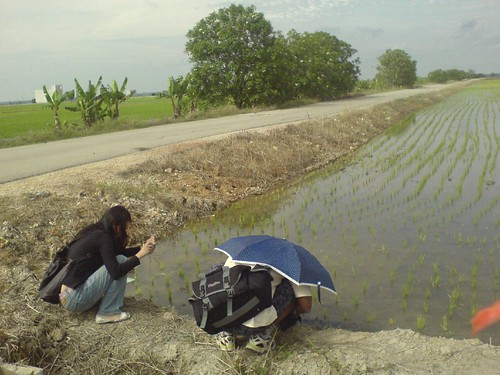 Getting some cutaway shots of the paddy field