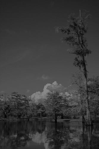 fisheating creek september 21 253