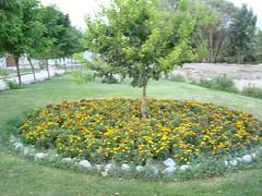 باغچه -- گل - درخت -دایره چمن (s_1310) Tags: از به در پارک باغچه گل پر طبیعت تقدیم یی دوستاران